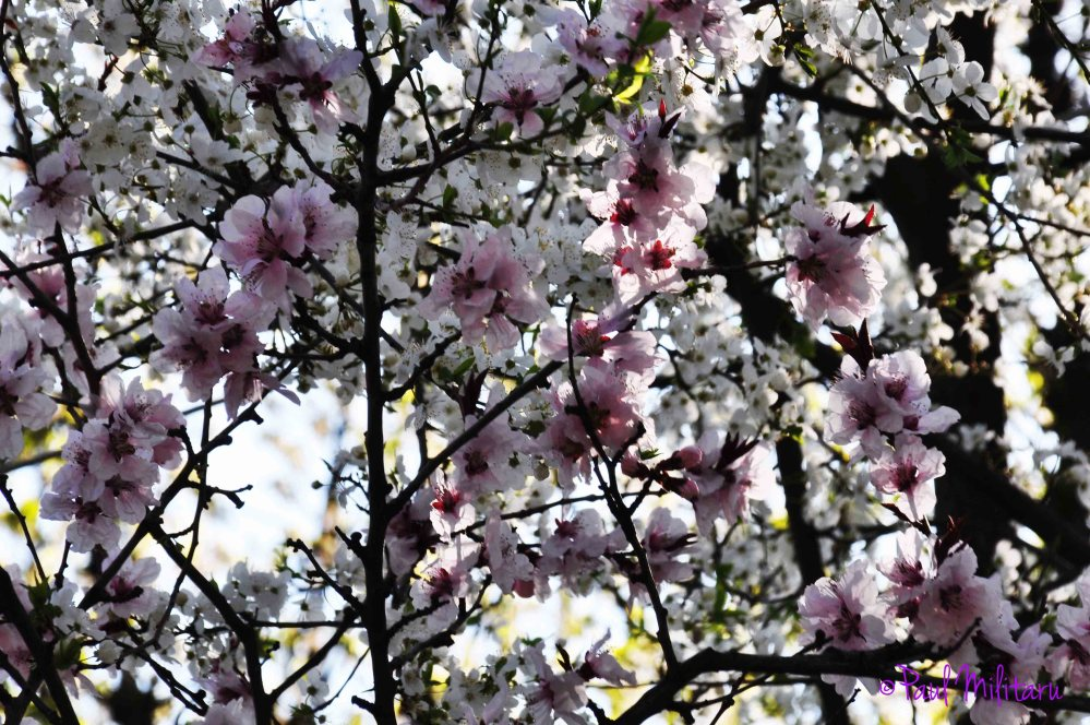 trees in bloom 1