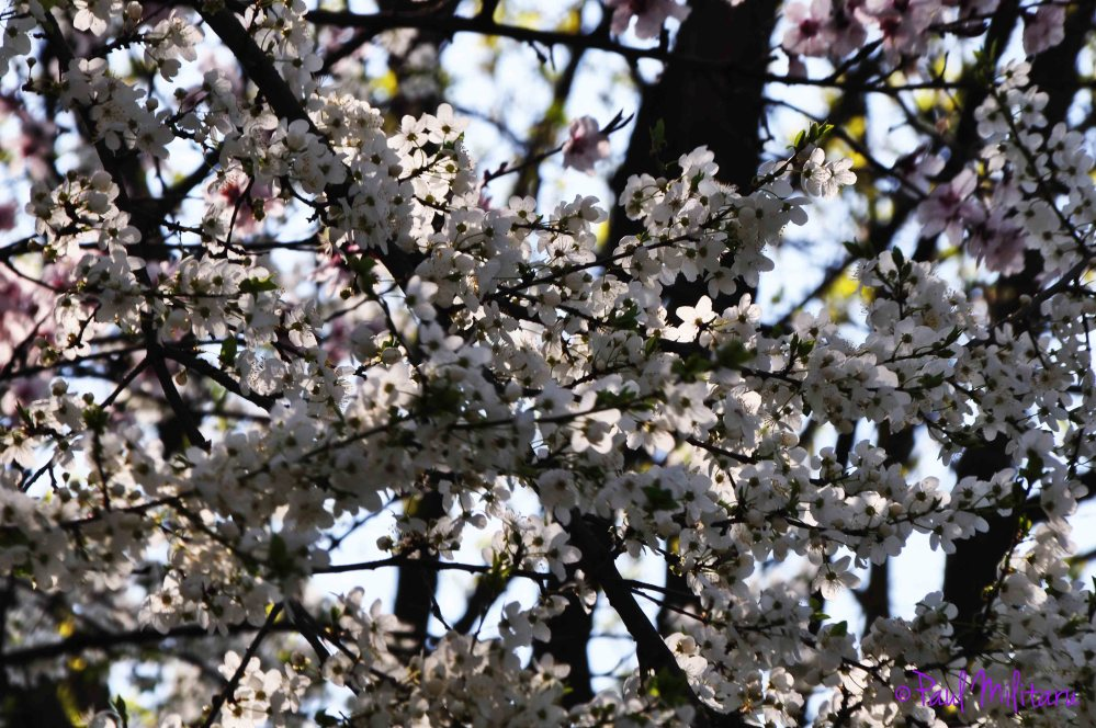trees in bloom 3