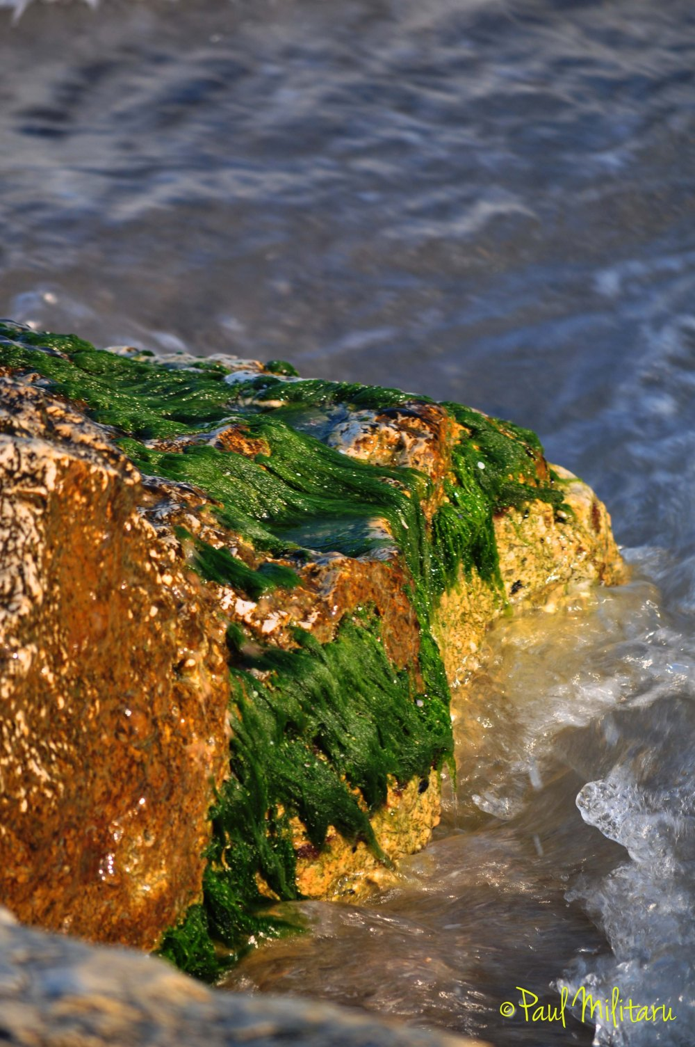 algae, stones and sea