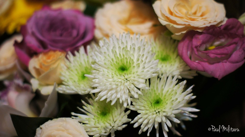 white chrysanthemums and roses