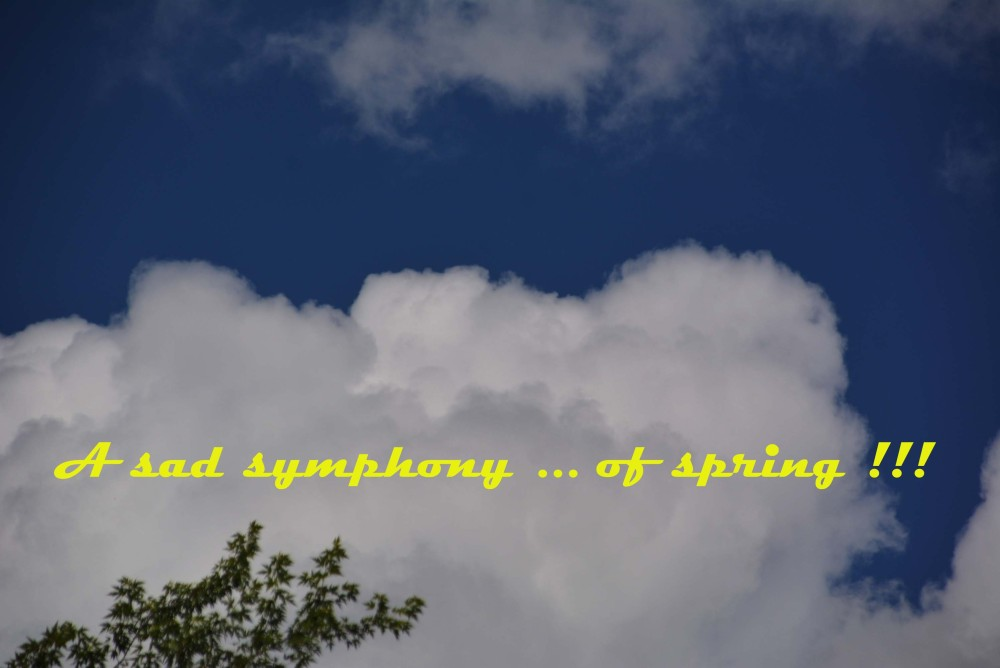 A sad symphony ... of spring