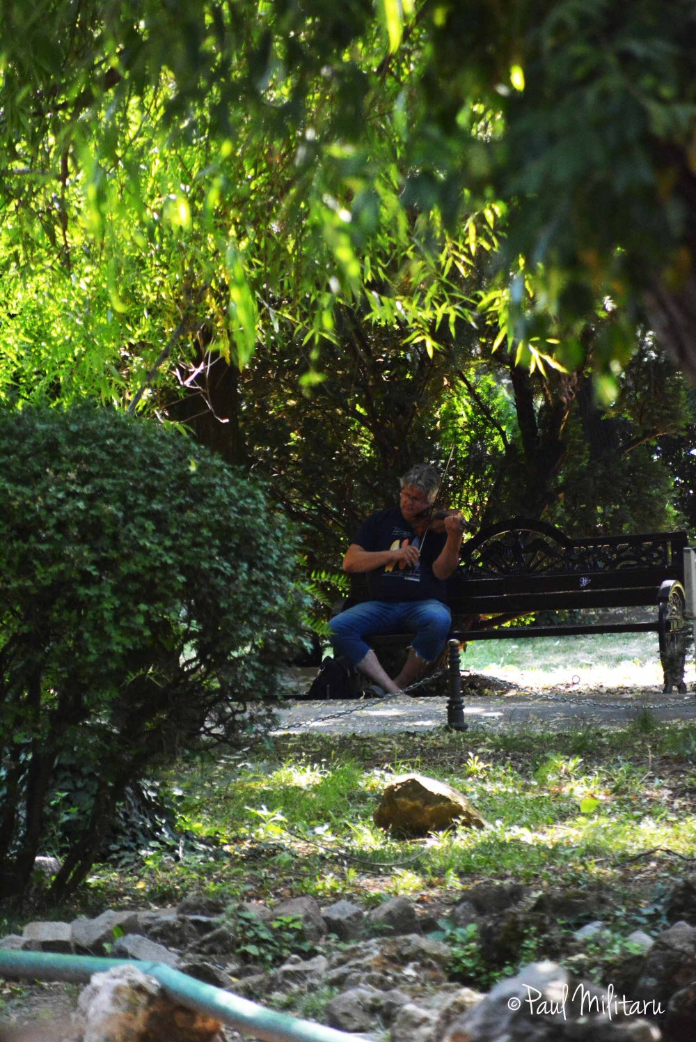 serenade in the middle of summer