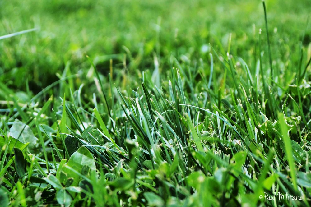 green grass from home...