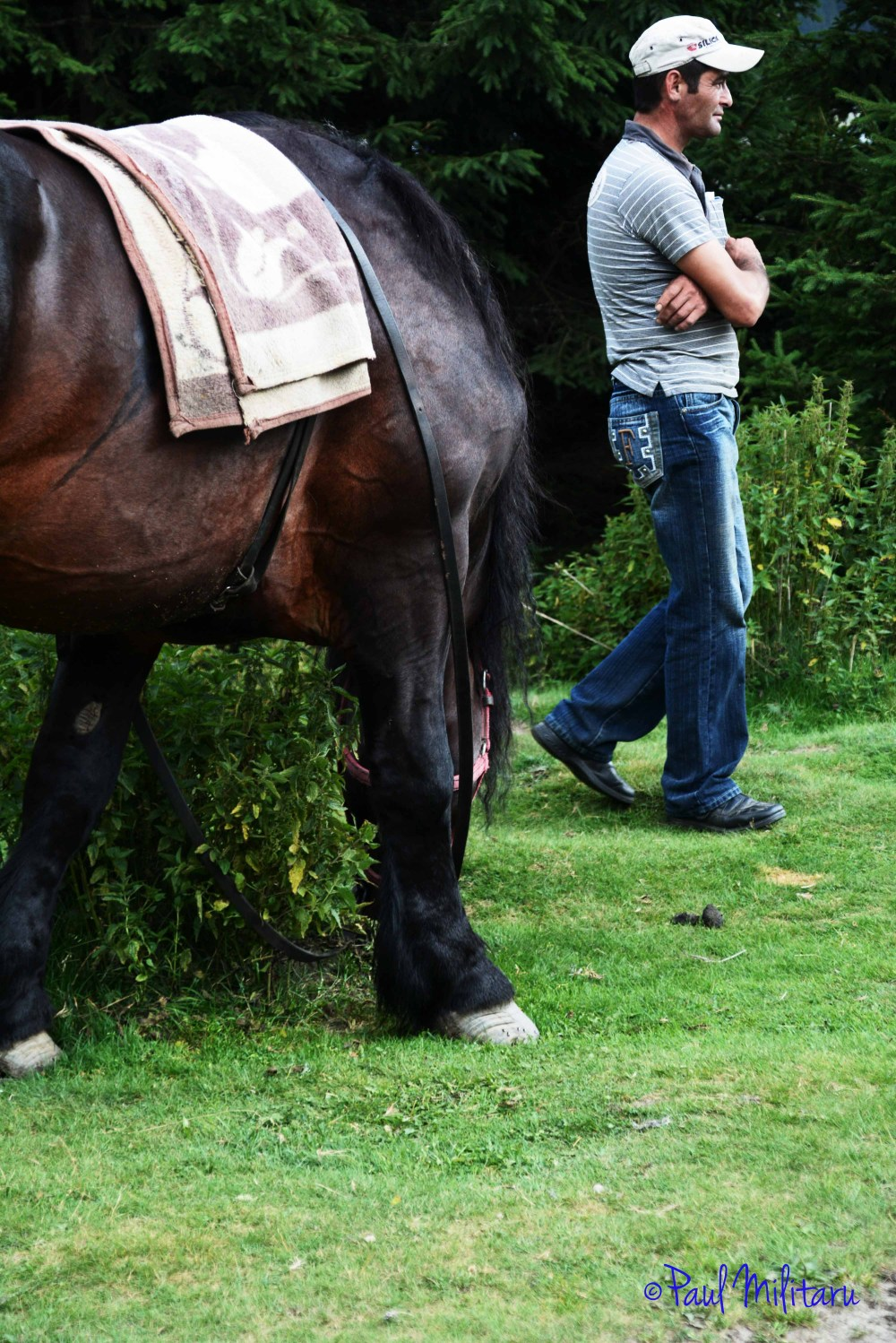 he and his friend the horse