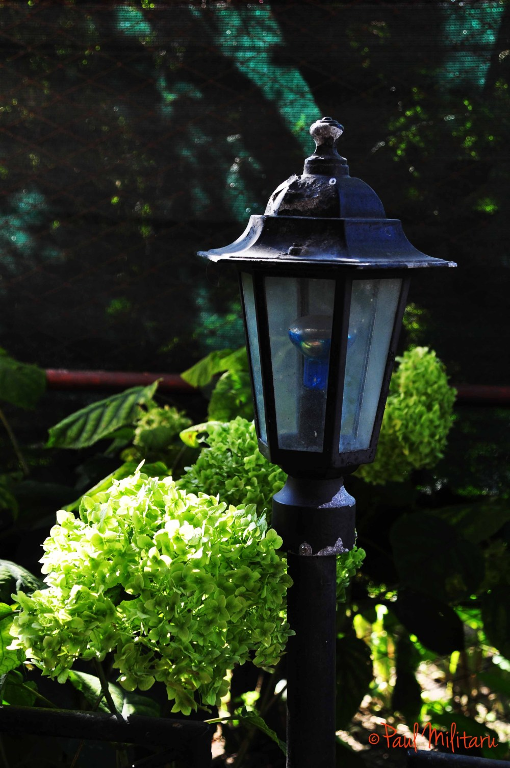 lamp and hydrangea