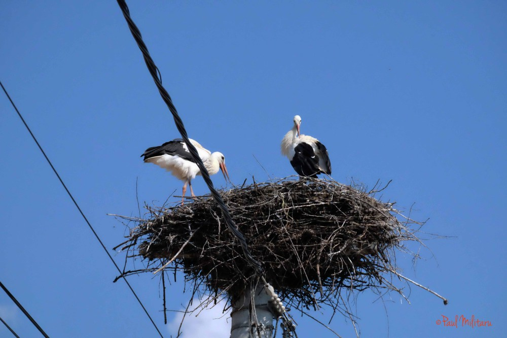 a beautiful family - storks