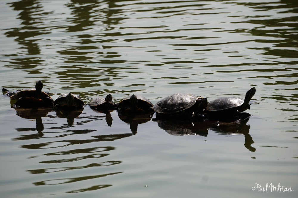 turtles at sun