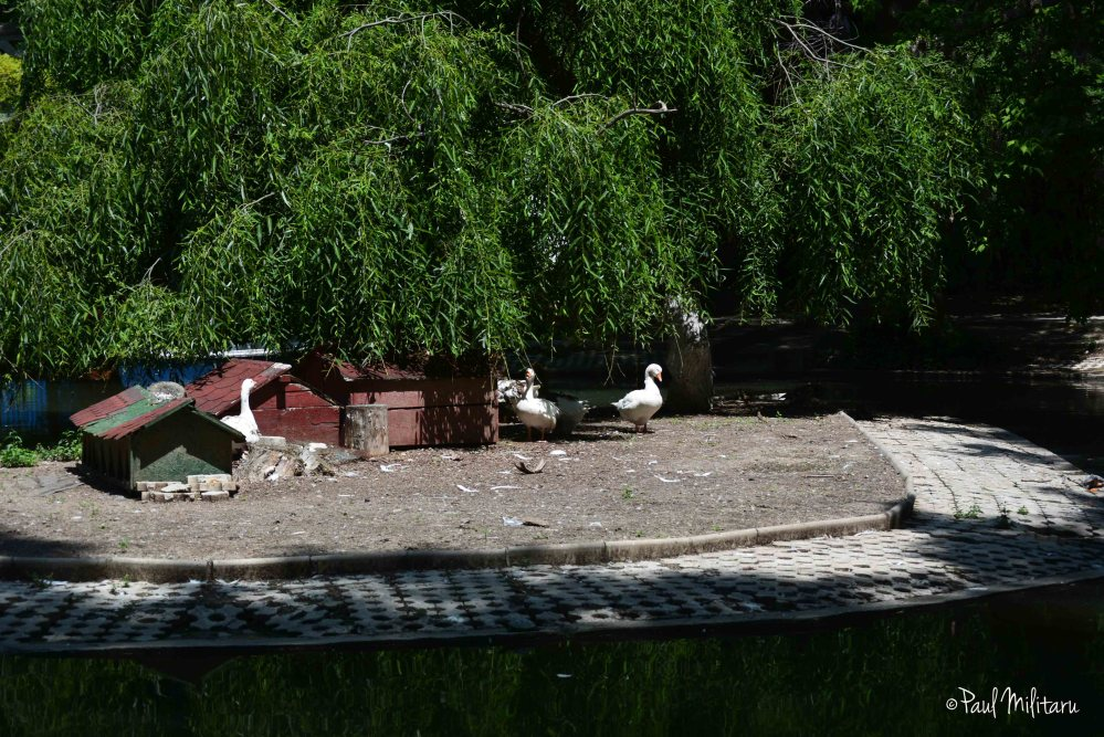 a place to rest...for geese