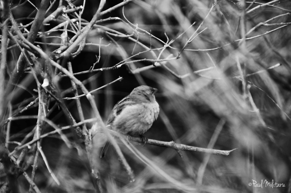 little sparrow among the empty branches