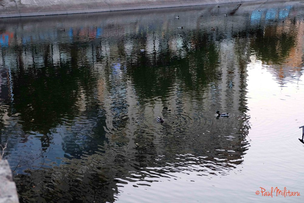 reflections and ducks on water