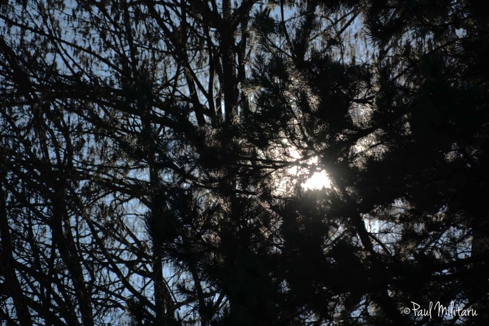 a bit of sun through the branches