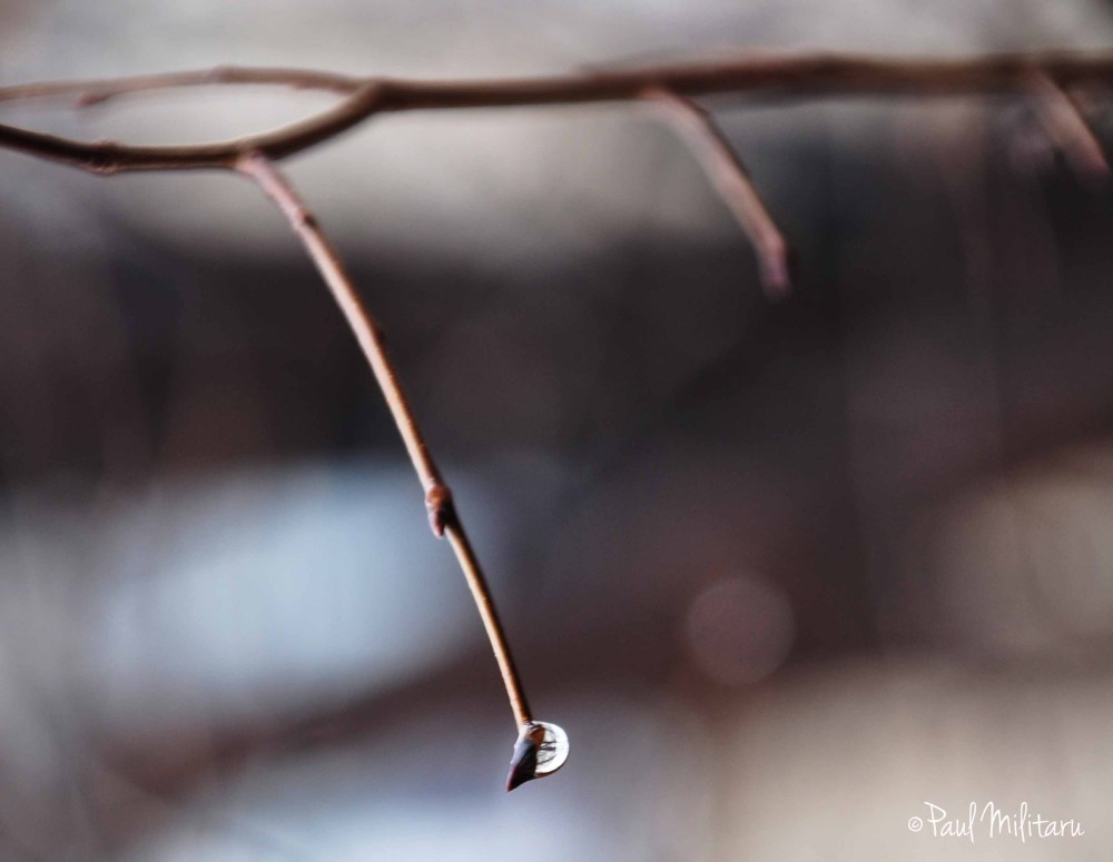 a crystalline water drop