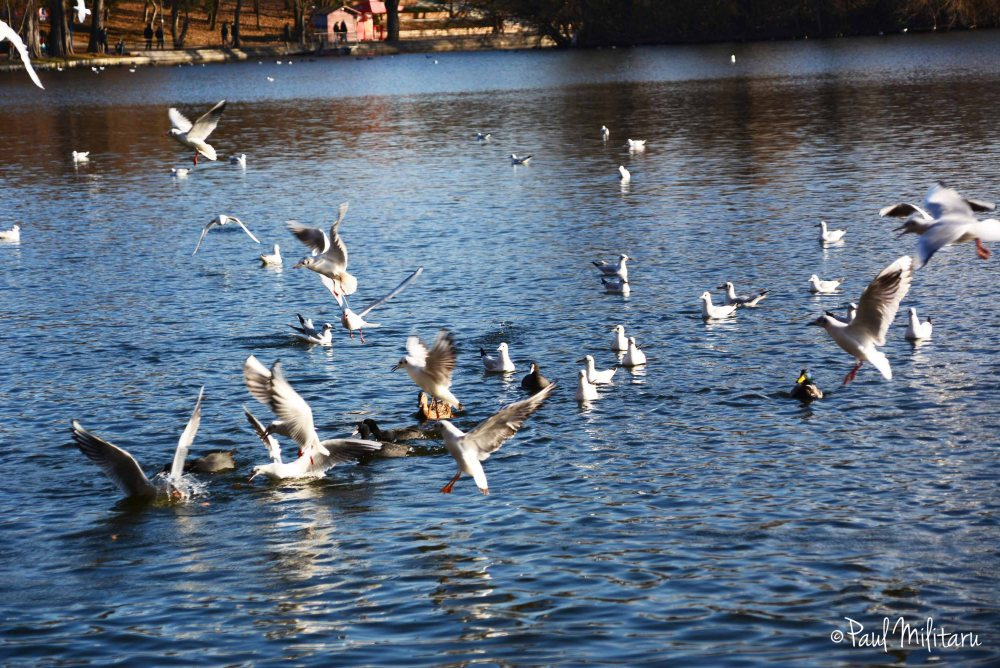 birds on lake