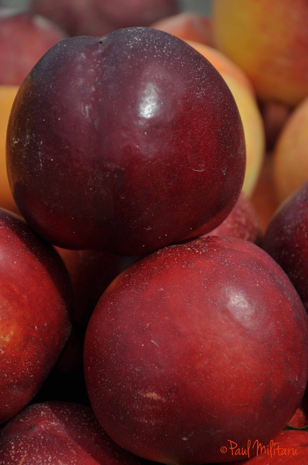 nectarine fruits