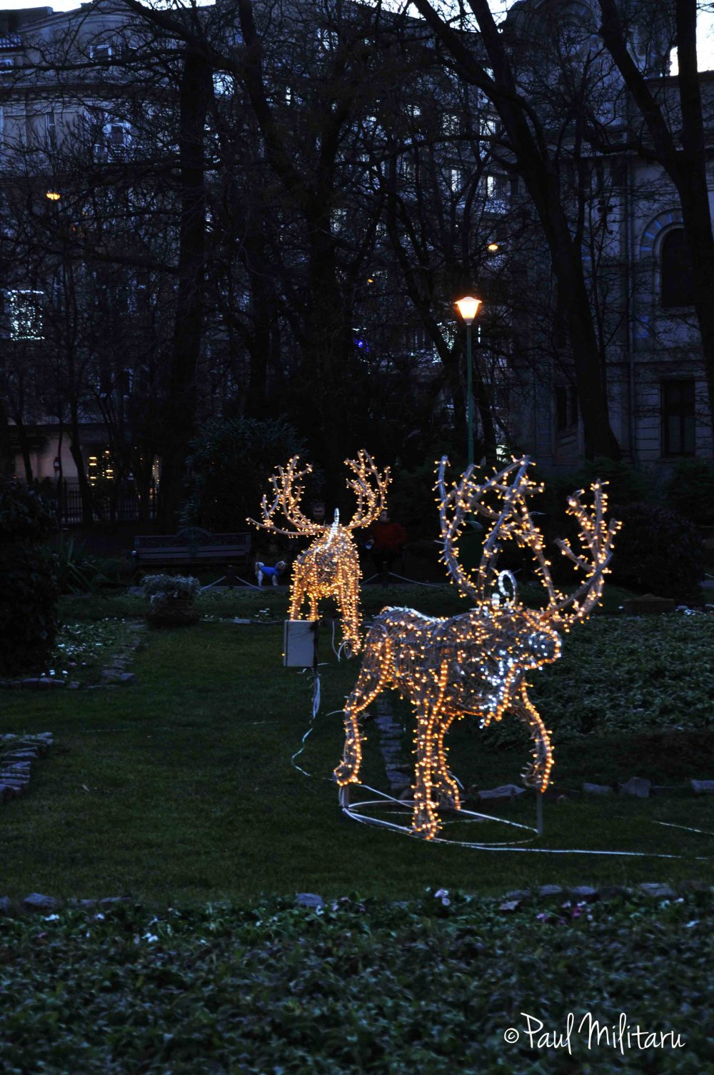 reindeers in night