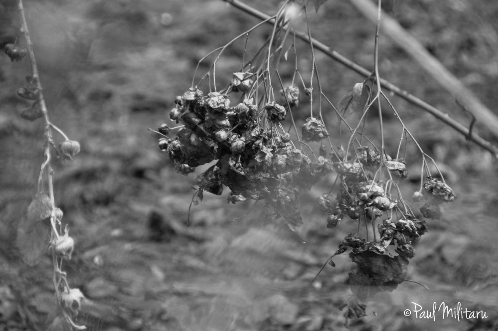 ex flowers in black & white