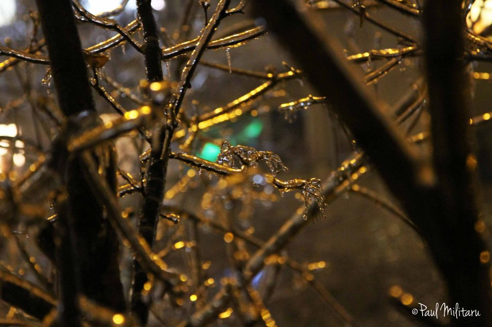glass branches 2