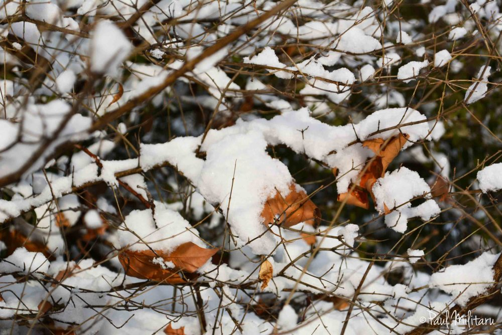 leaves under snow