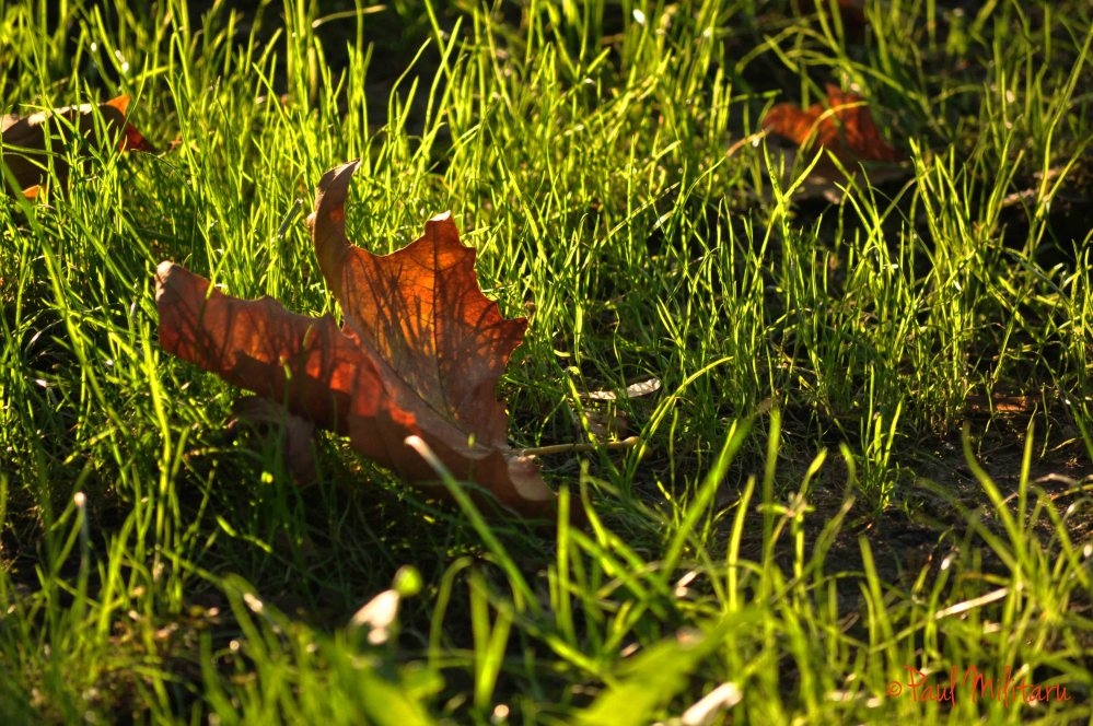 solar reflections in a dropped leaf
