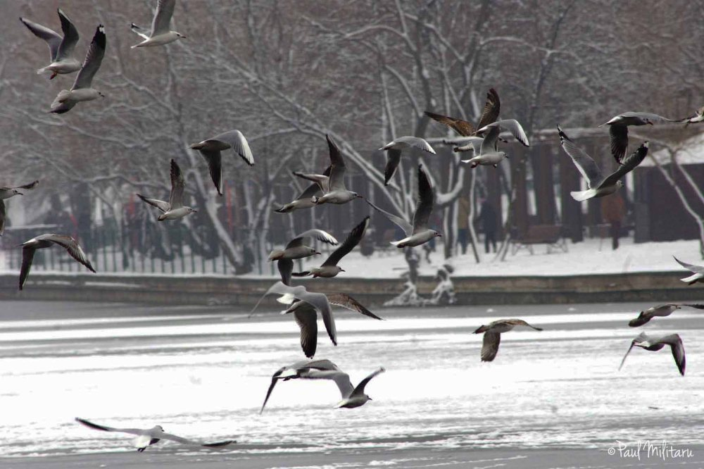 flight over the frozen lake