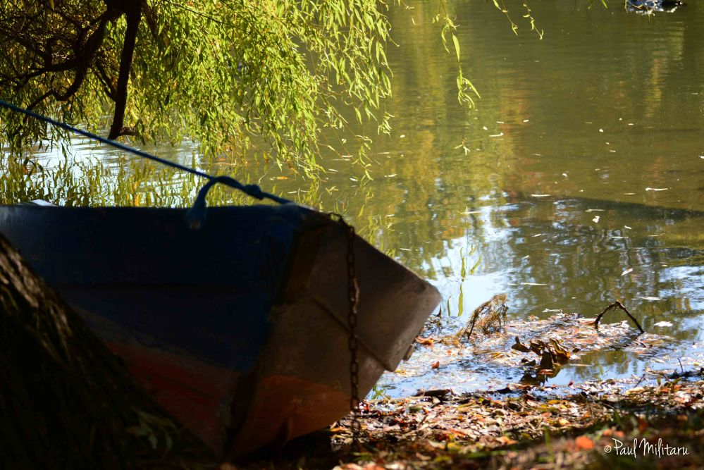 in the shadow of the shallow willow