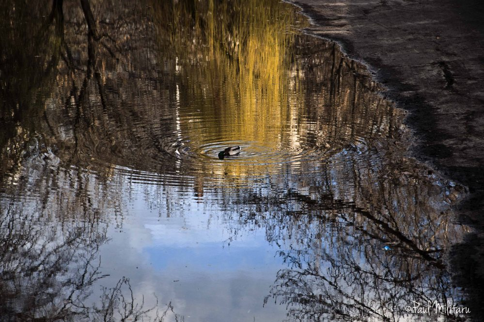 philosophy of a lonely duck