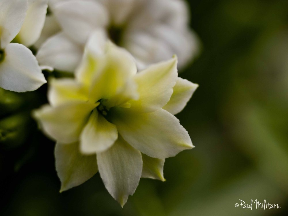 white flower in diffused light
