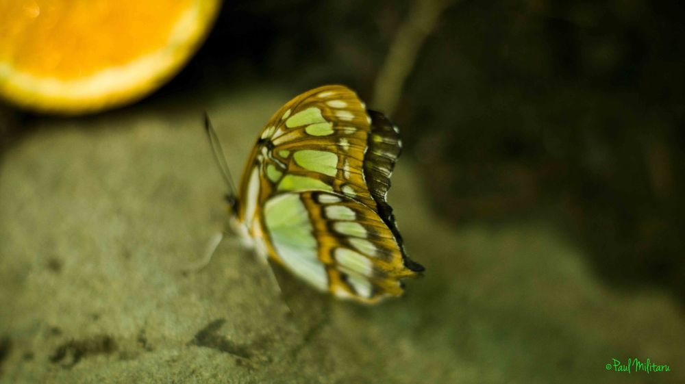 exotic butterfly on stone