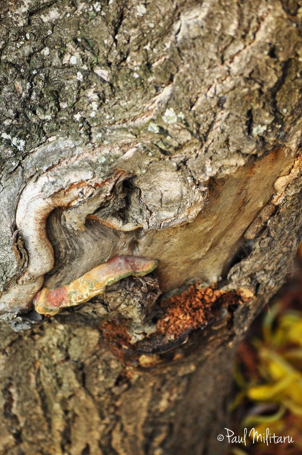 art in bark of a tree