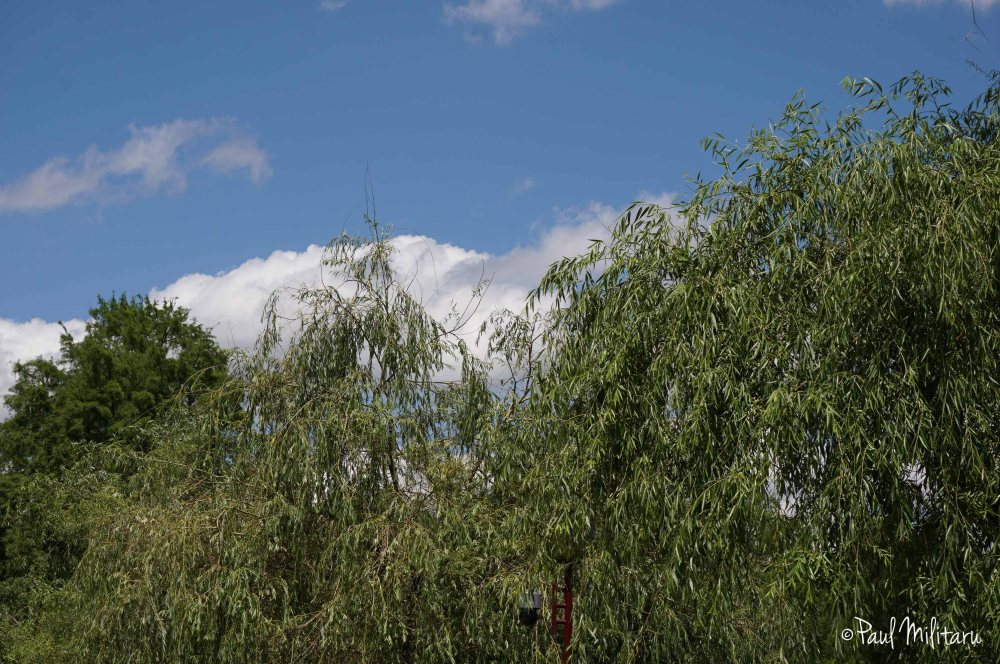 clouds over willows