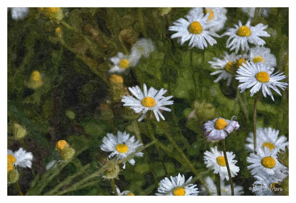 a little bit of art - chamomile painted