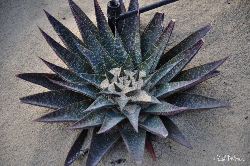 exotic plant in sand
