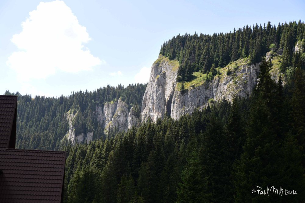 rocks and fir forests