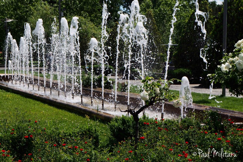 artisan fountain and white roses