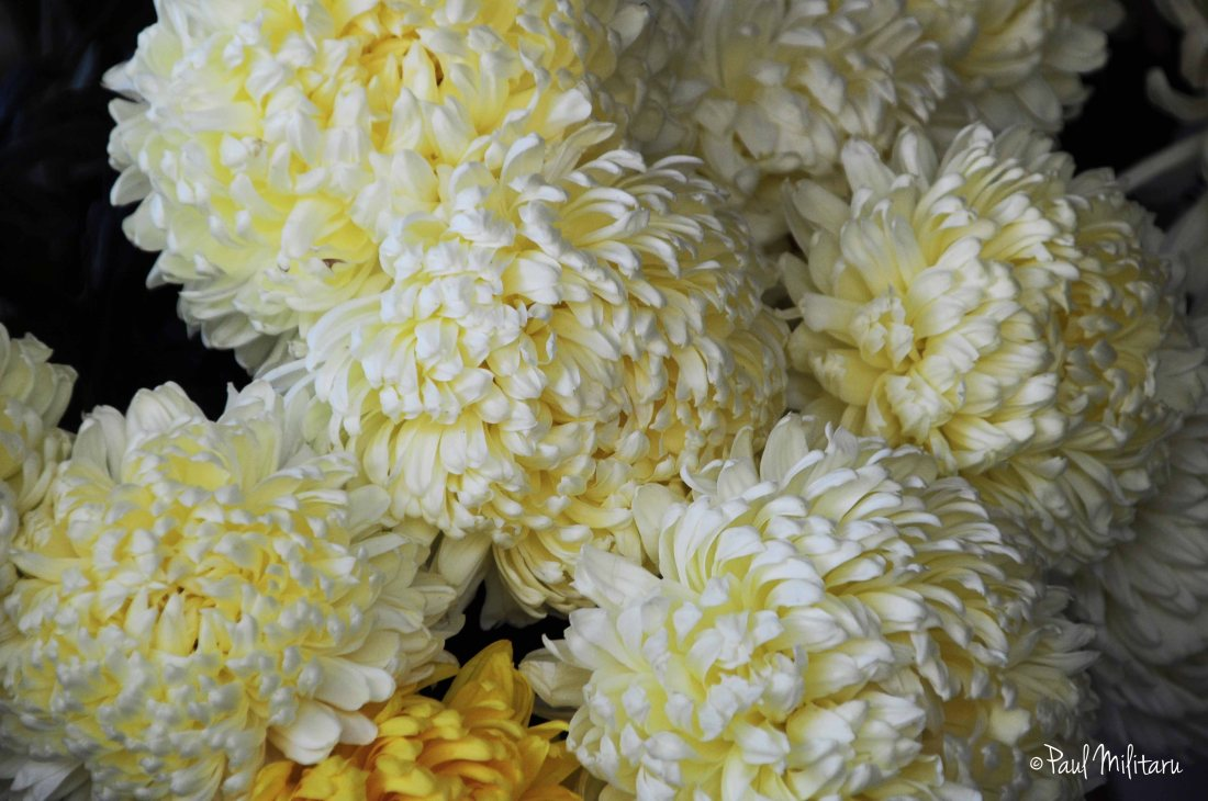 autumn flowers - bouquet of chrysanthemums