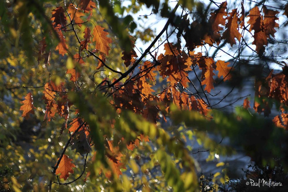 rusty leaves under the sun