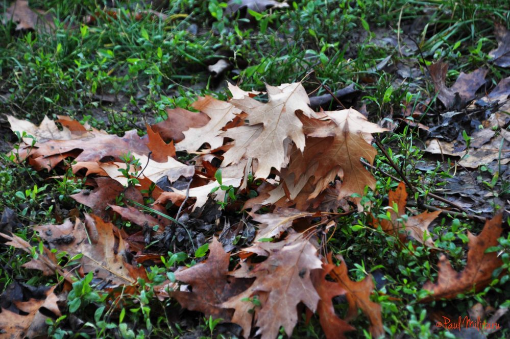 dry leaves, lost hopes...