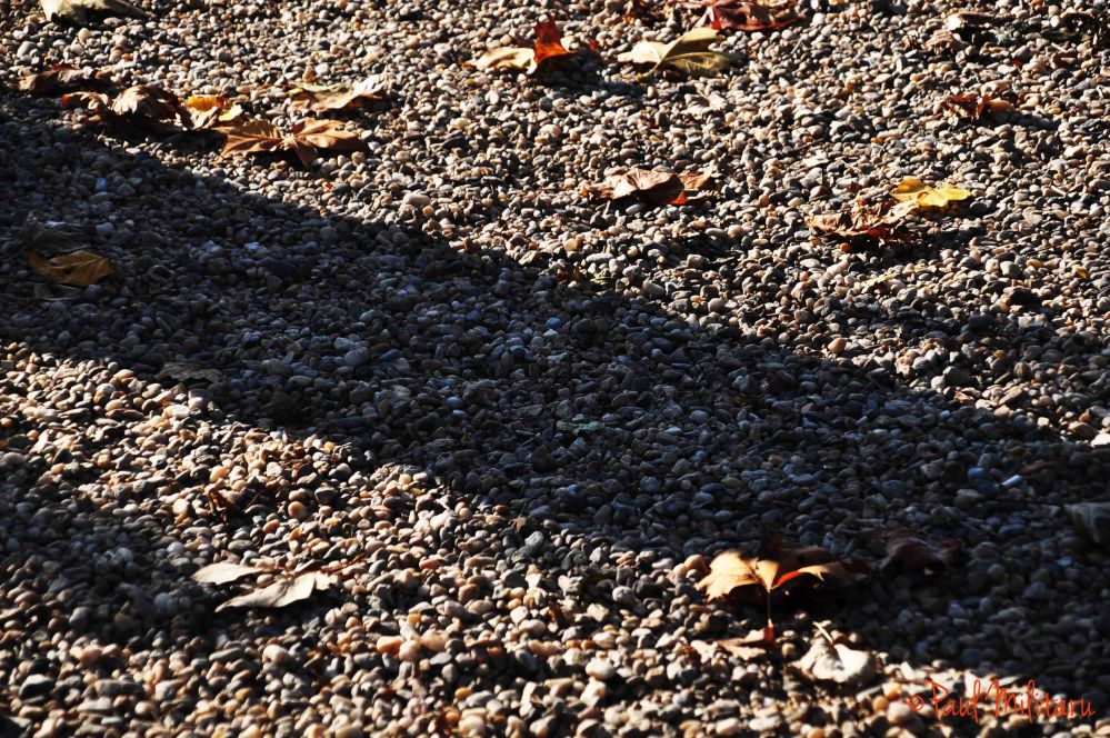 shadow on the gravel