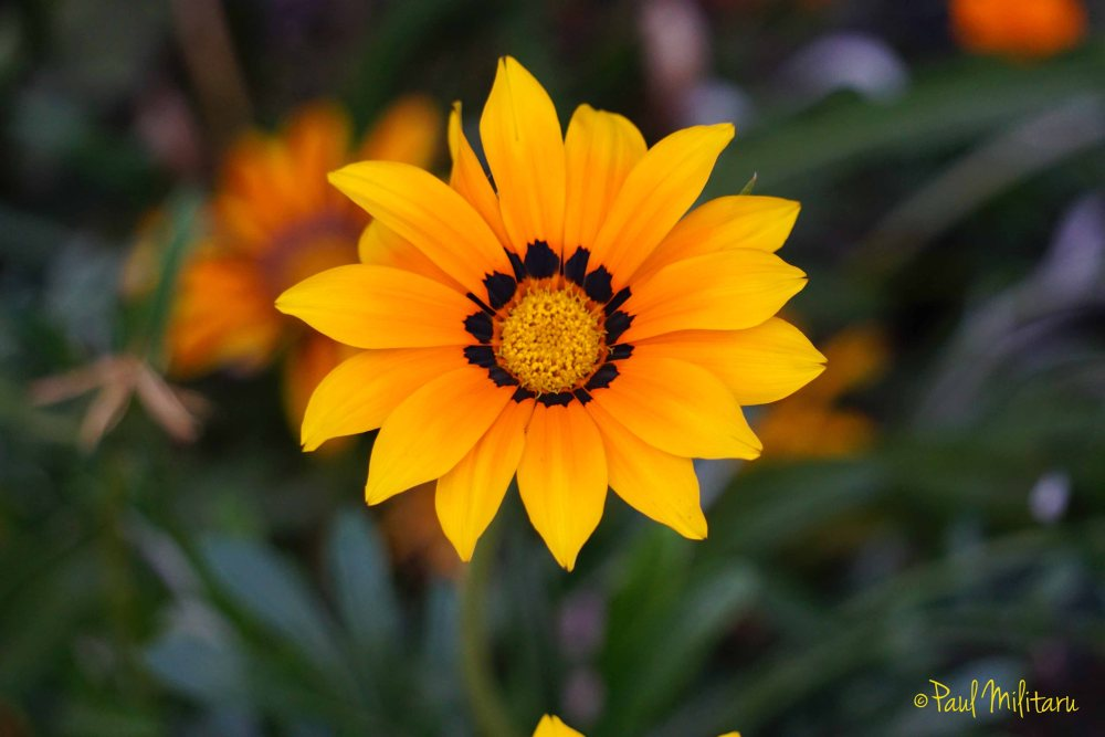a beautiful star - yellow-orange