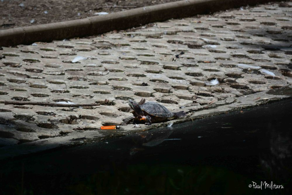 a turtle ... and a lighter
