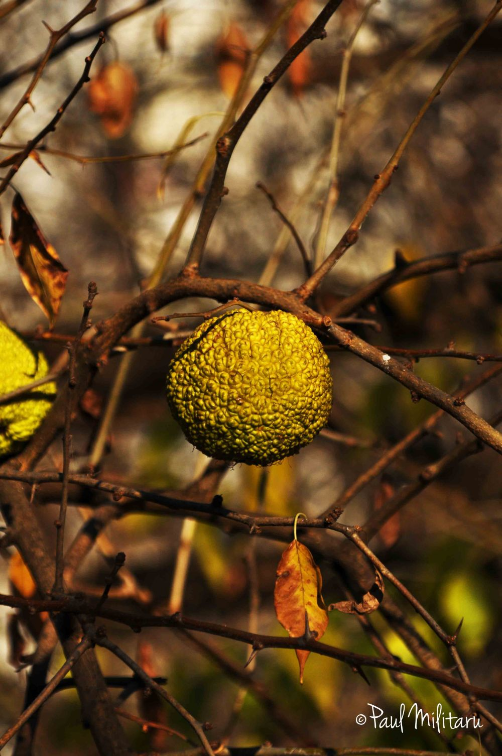 exotic fruit in November