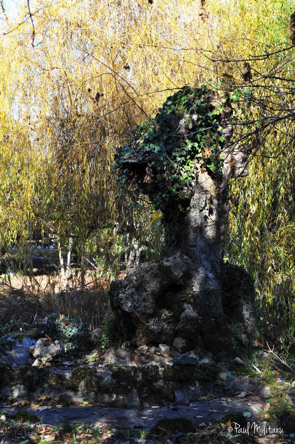 loneliness among the willows