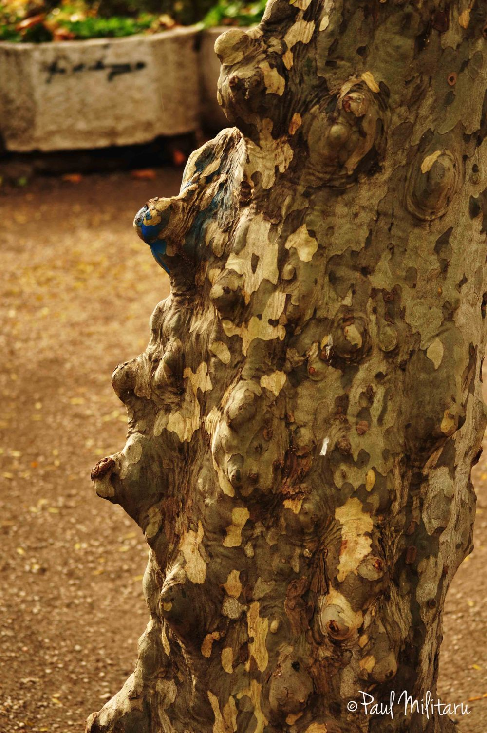 weird tree bark