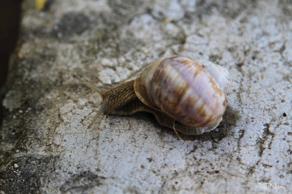 curiosity of a snail