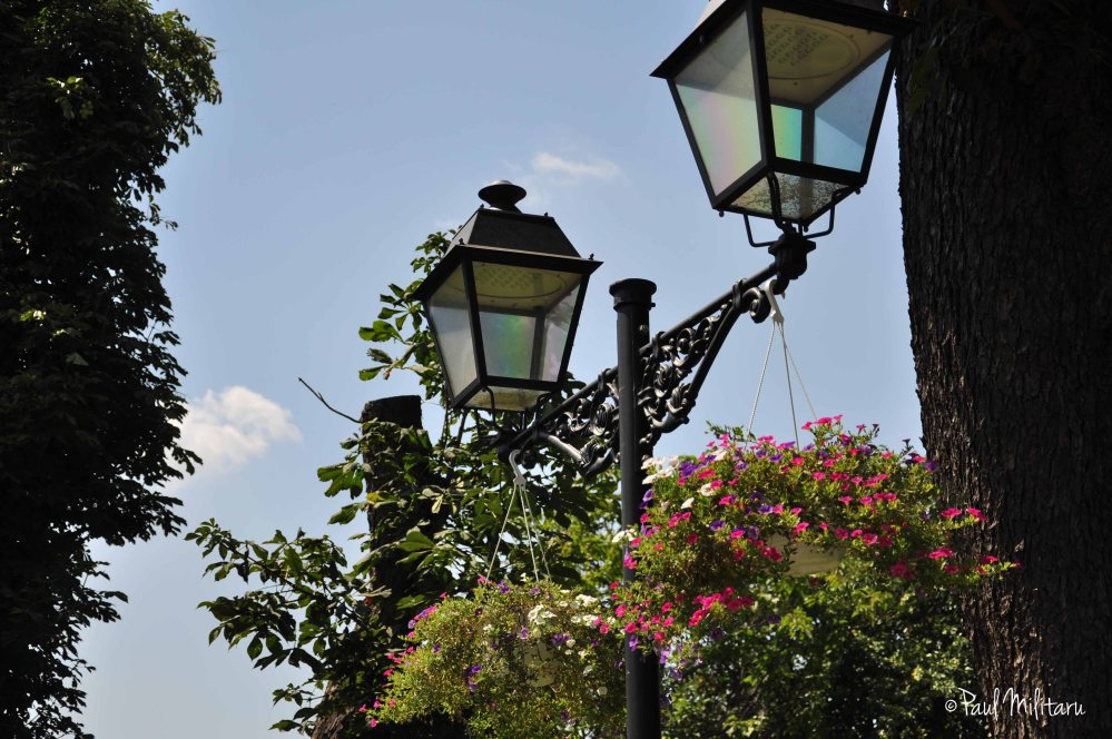 lamps and flowers