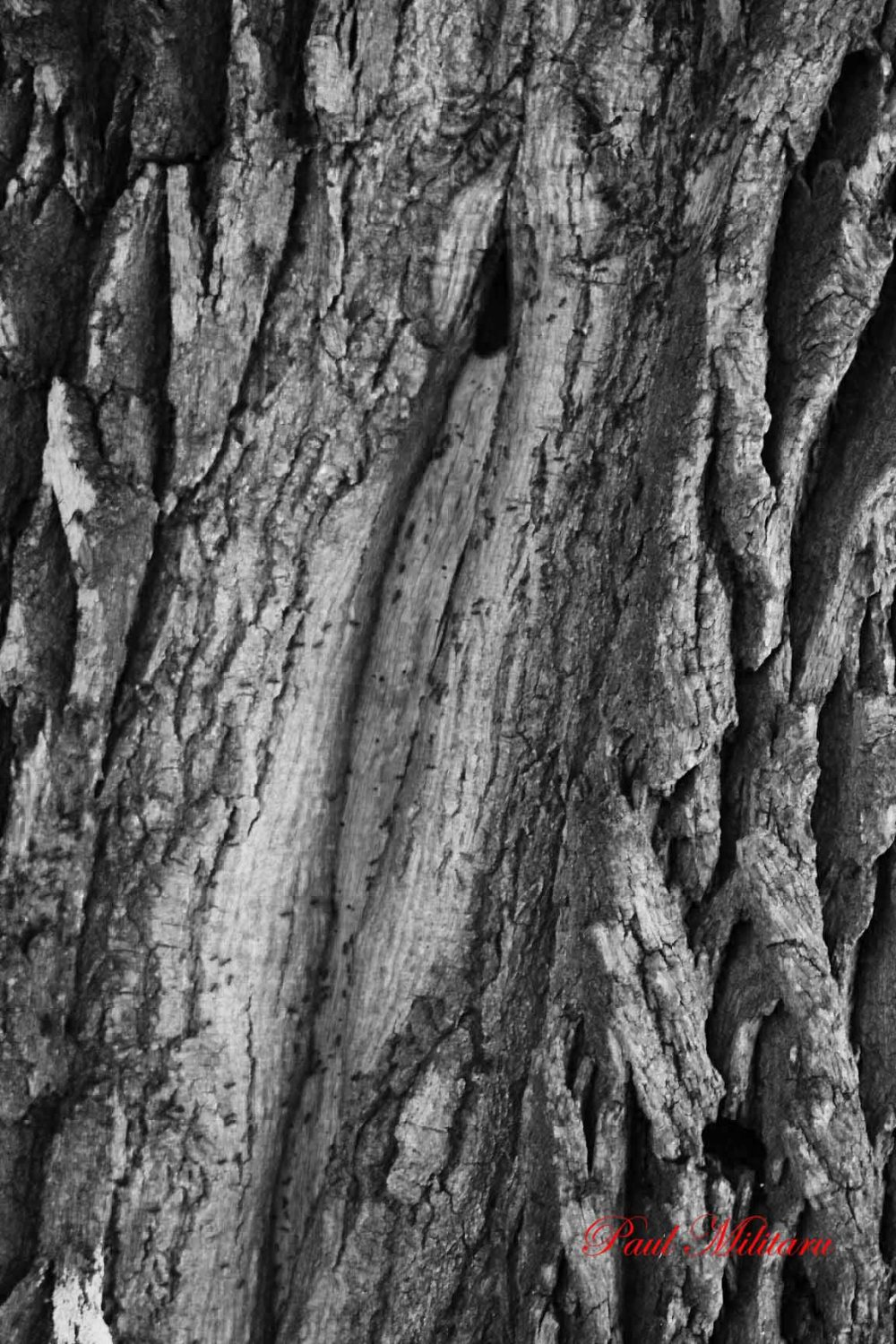 bark of an old tree