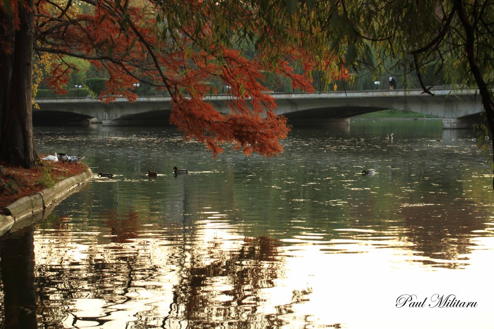 the reflections of a long forgotten autumn