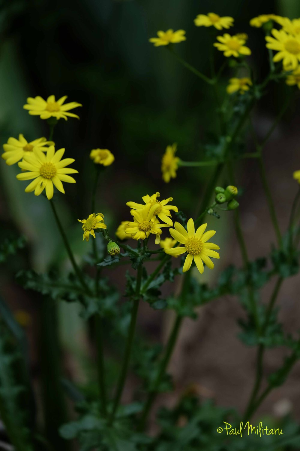 yellow delicate flowers