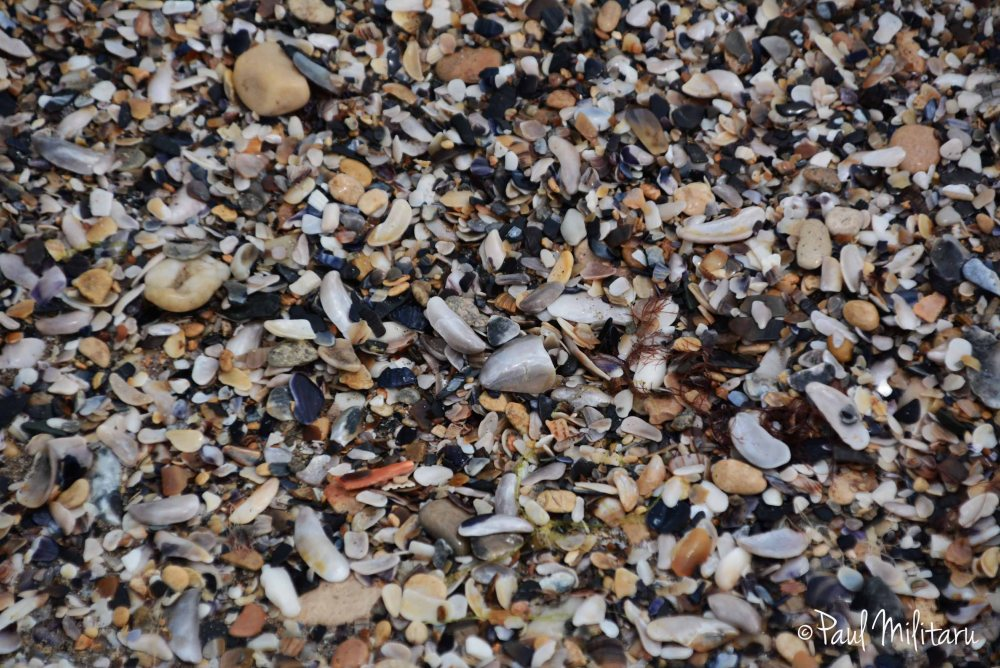 pebbles and shells