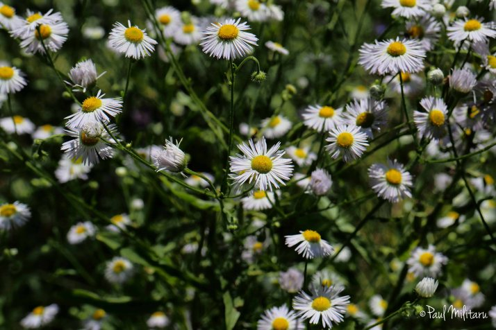 a new chance for the future - chamomile flowers